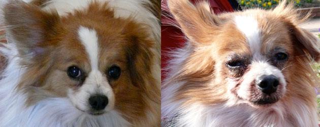 犬の皮膚病
