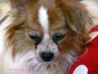 愛犬デュオの皮膚病