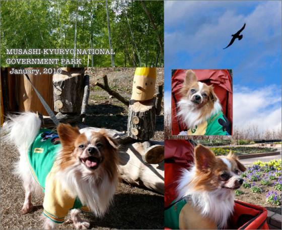 犬と森林公園へ