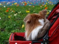 花を愛でる犬