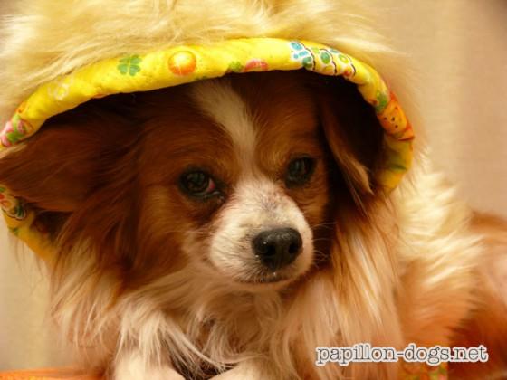 ファーコート着用の愛犬デュオ