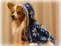 手作りレースパーカー着用の愛犬デュオ